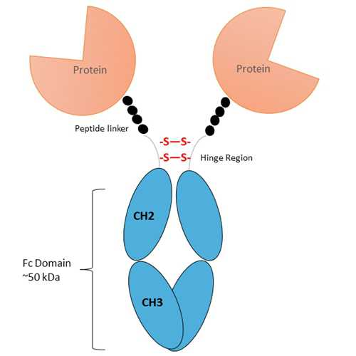 Recombinant Mouse ICOSL Fc-Fusion Protein