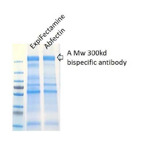 Abfectin Expi293 Cell Transfection Kit