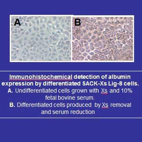 SACK-Xs Lig-8 clonal adult rat hepatocytic stem cells