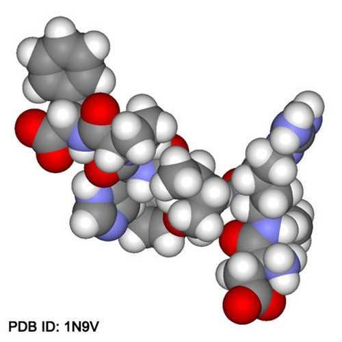 Anti-Angiotensin II (human) Antibody