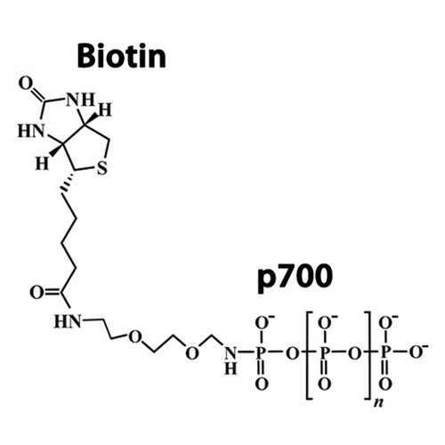 Biotinylated Polyphosphate, Long Chain